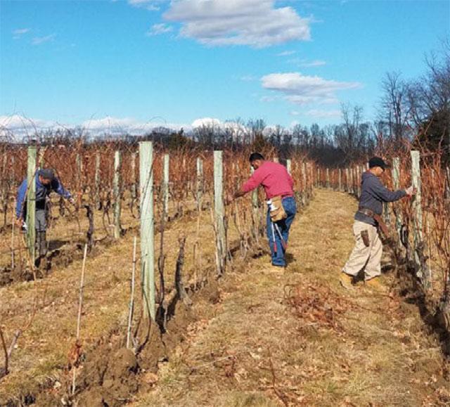Pruning the Vineyard