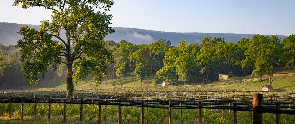 Best Wine Tasting Room Virginia | Winery Near Me | Wine Flights
