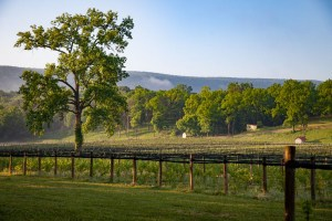Shenandoah Mountains at Muse Vineyards