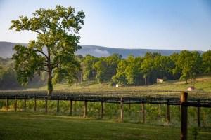 Shenandoah Mountains at Muse Vineyards