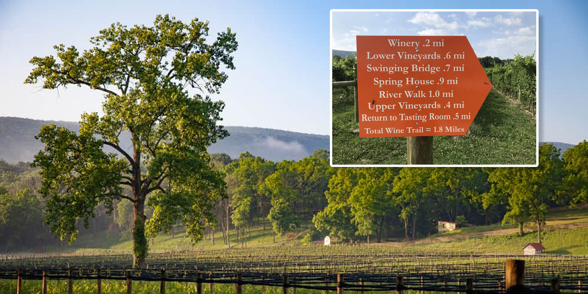 Guided Hike - Wine Trail at Muse Vineyards